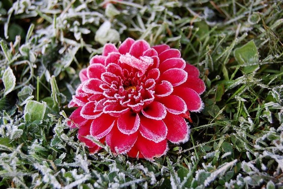 Hoa bọc trong tuyết 2ac31410