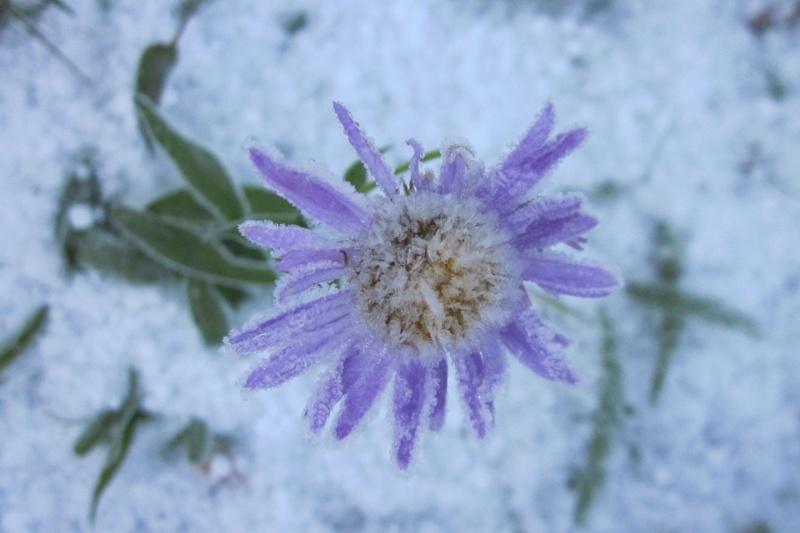 Hoa bọc trong tuyết 431ce810