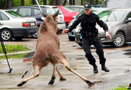 Chiện... cảnh sát Cop510