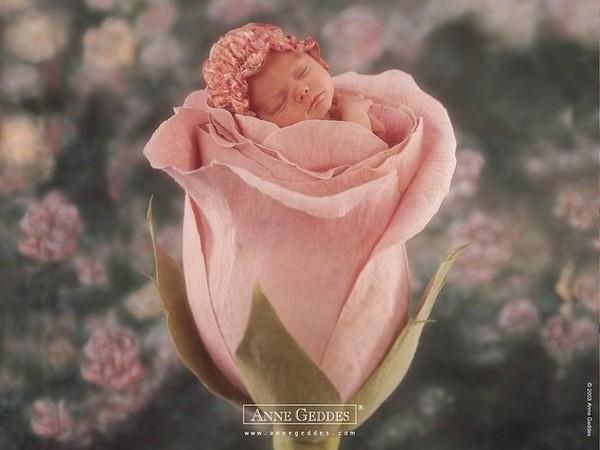 Chùm ảnh bé và hoa - Anne Geddes Me-man12