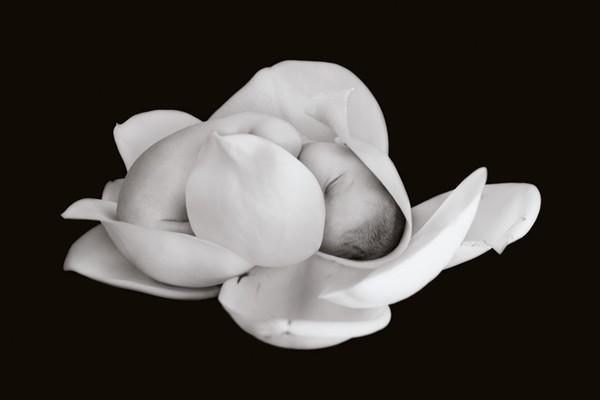 Chùm ảnh bé và hoa - Anne Geddes Me-man21