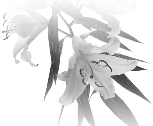 PHẠM DUY-MỘT ÁNH SAO KHUÊ VỪA VỤT TẮT Qpfk9d10
