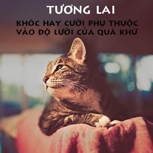Những tuyên ngôn hài hước của cư dân mạng Tu510