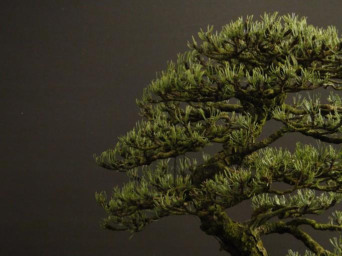 Pinus mugo 2004 - Page 3 A12