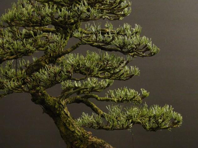 Pinus mugo 2004 - Page 3 B11