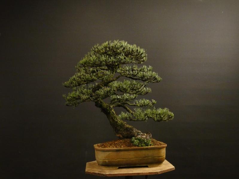 Pinus mugo 2004 - Page 4 Dsc09112