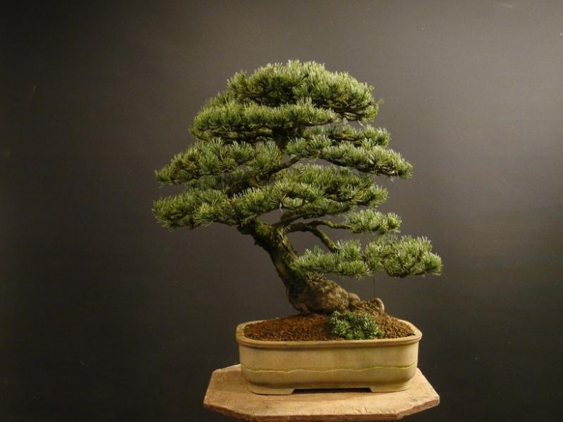 Pinus mugo 2004 - Page 3 Leden-10