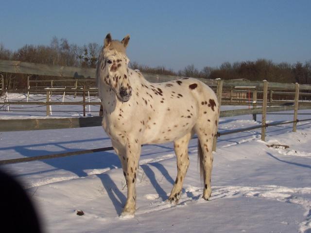 Les chevaux et la neige 100_5611