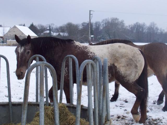 Les chevaux et la neige - Page 2 Bandi10