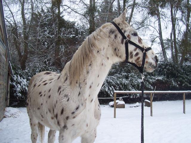 Les chevaux et la neige - Page 2 Dakota10