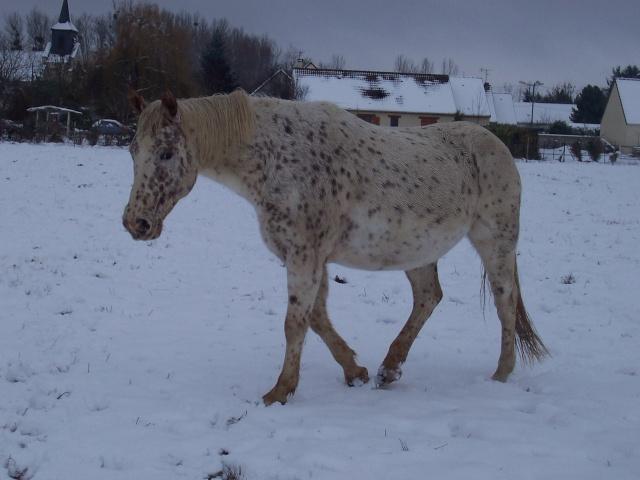 Les chevaux et la neige - Page 2 Snow10