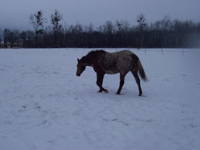 Les chevaux et la neige - Page 2 Topsan10