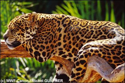 Belles photos d'animaux sauvages - Page 35 256_fi10