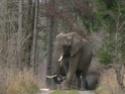 Drôle de faune en Bavière, je trouve! Dscn5111