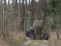 Drôle de faune en Bavière, je trouve! Dscn5112