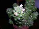En fleurs pour la 1 ère fois! Dscn5214