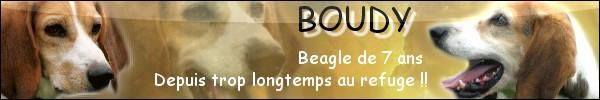 BOUDY, beagle mâle, 10 ans (14) Bannia75