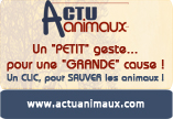 Le Forum SOS`Animals Bannie10