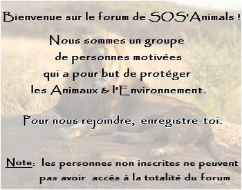 Le Forum SOS`Animals Intro10