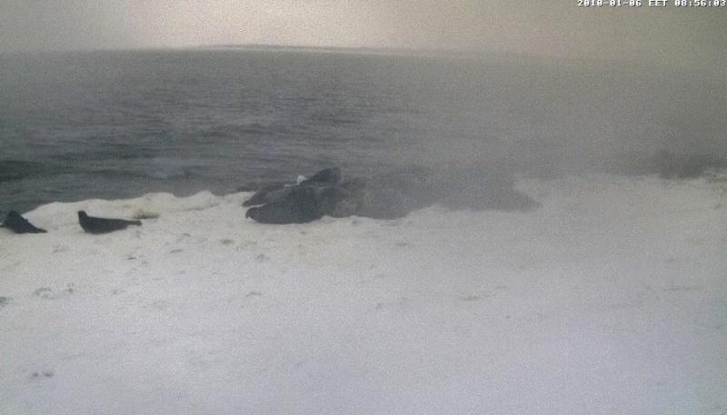 Grey Seal webcam - Page 6 Wmplay10