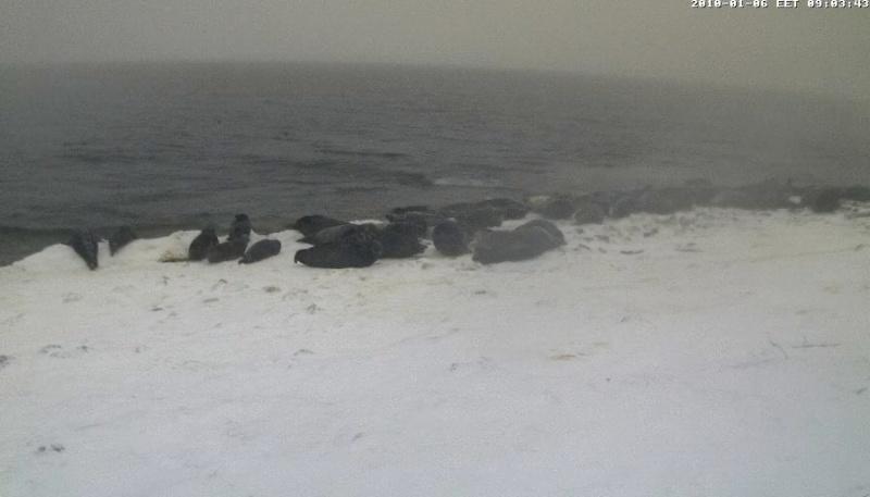 Grey Seal webcam - Page 6 Wmplay11