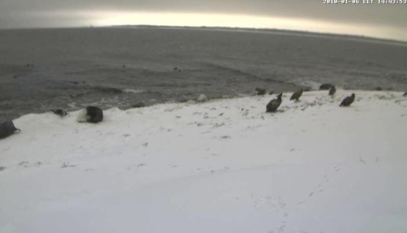 Grey Seal webcam - Page 6 Wmplay17