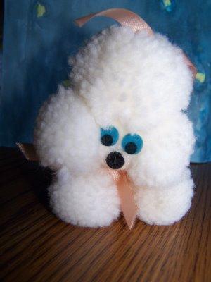 Sherbert the Mini Poodle Sherbe10