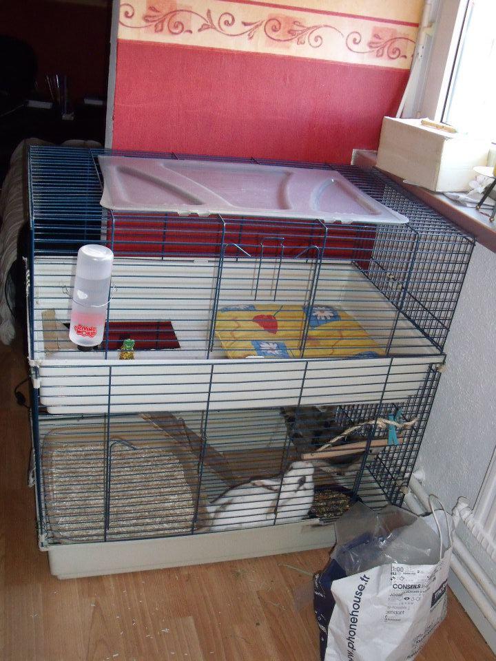 Les pourquoi de la cage avec lenclos bah ca lui fait plus de place et vu quelle adore grimper a létage je ne me vois pas lui priver de ce petit