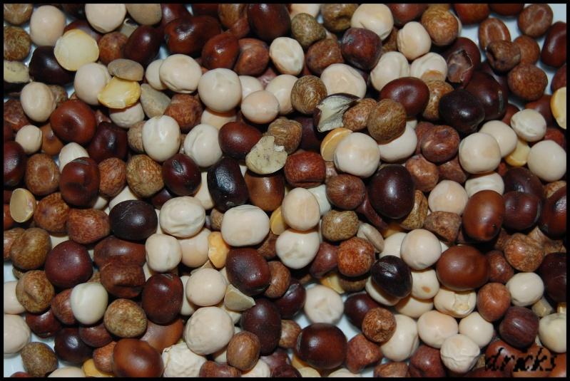 les graines Dsc_0123