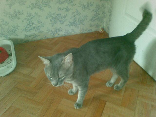 Appel aux dons pour aider sauvetages chats d'un Ami pr la Vie (17) 17112010