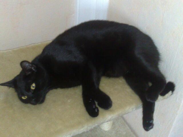 Appel aux dons pour aider sauvetages chats d'un Ami pr la Vie (17) 29032010