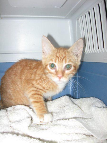 Appel aux dons pour aider sauvetages chats d'un Ami pr la Vie (17) Chaton11