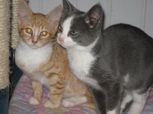 Appel aux dons pour aider sauvetages chats d'un Ami pr la Vie (17) Chaton12