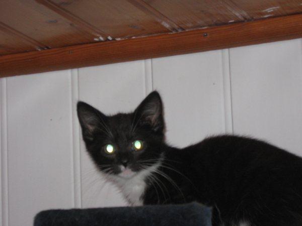 Appel aux dons pour aider sauvetages chats d'un Ami pr la Vie (17) Chaton13