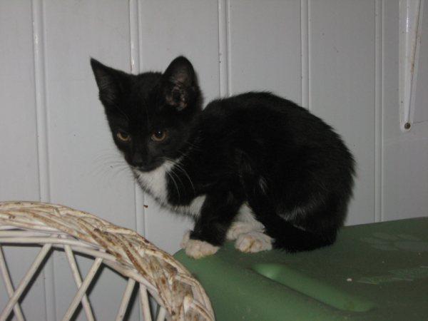Appel aux dons pour aider sauvetages chats d'un Ami pr la Vie (17) Chaton14