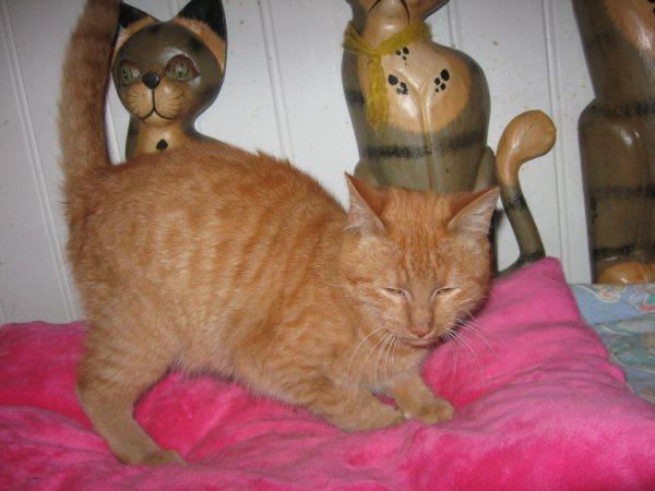 Appel aux dons pour aider sauvetages chats d'un Ami pr la Vie (17) Chaton23
