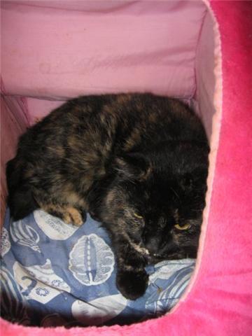 Appel aux dons pour aider sauvetages chats d'un Ami pr la Vie (17) Getatt10