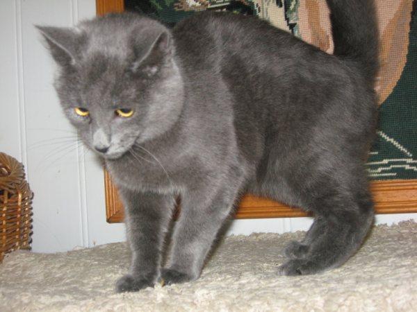 Appel aux dons pour aider sauvetages chats d'un Ami pr la Vie (17) Getatt11