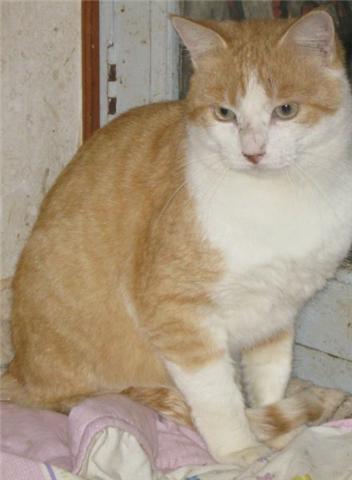 Appel aux dons pour aider sauvetages chats d'un Ami pr la Vie (17) Getatt14