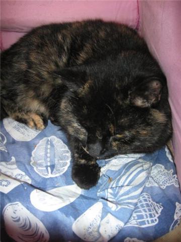 Appel aux dons pour aider sauvetages chats d'un Ami pr la Vie (17) Getatt15