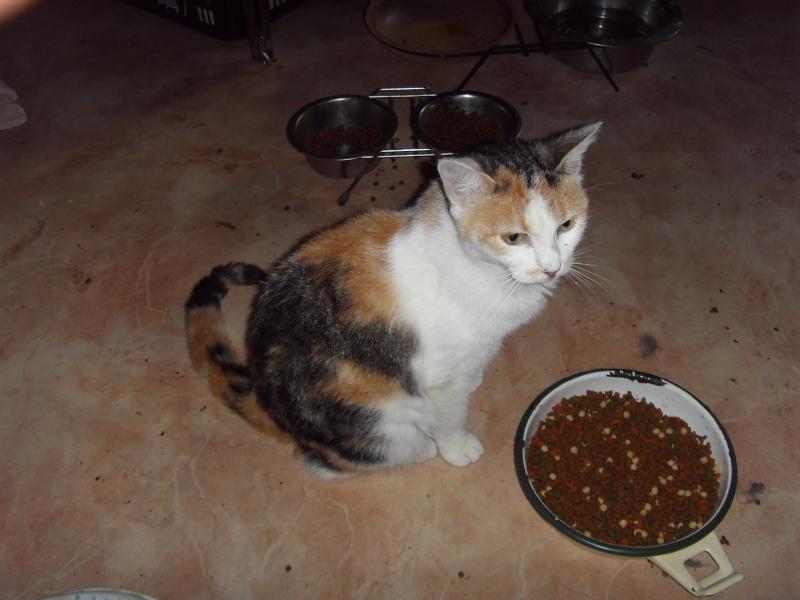 Appel aux dons pour aider sauvetages chats d'un Ami pr la Vie (17) Sdc10710