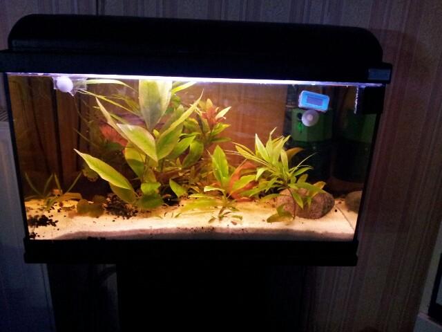 ma fishroom 13554310