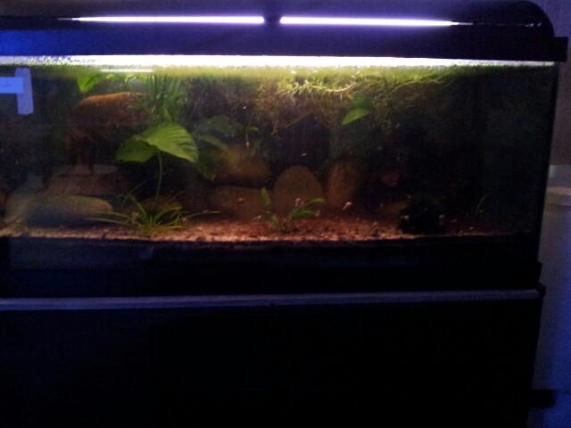 ma fishroom 13554313