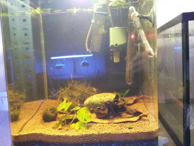 ma fishroom 13554315