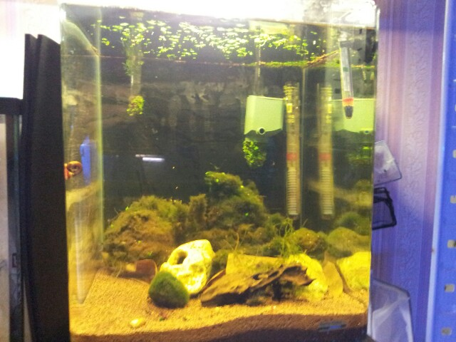 ma fishroom 13554316