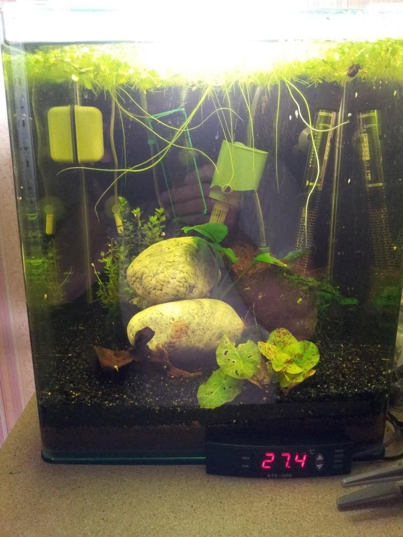 ma fishroom 20130110