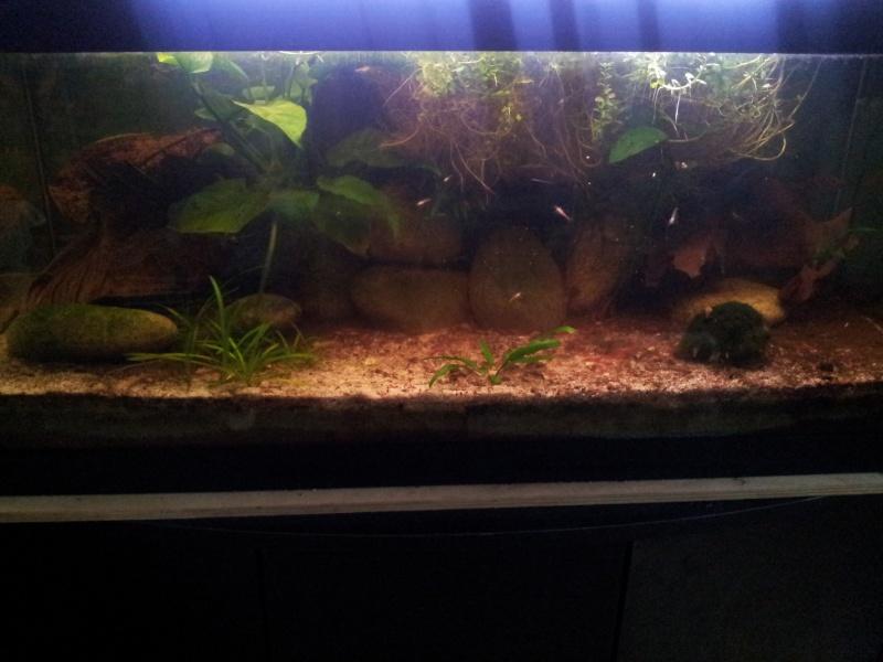 ma fishroom 20130114