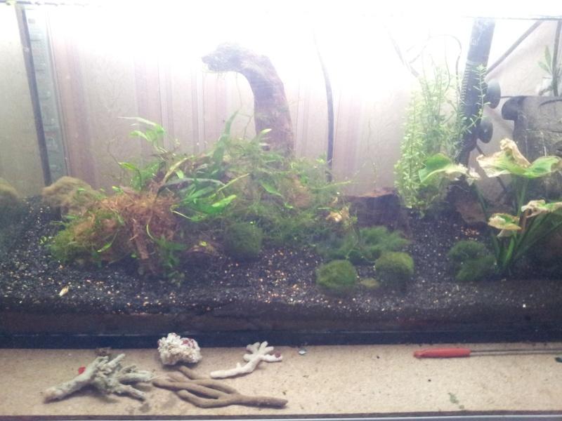 ma fishroom 20130115
