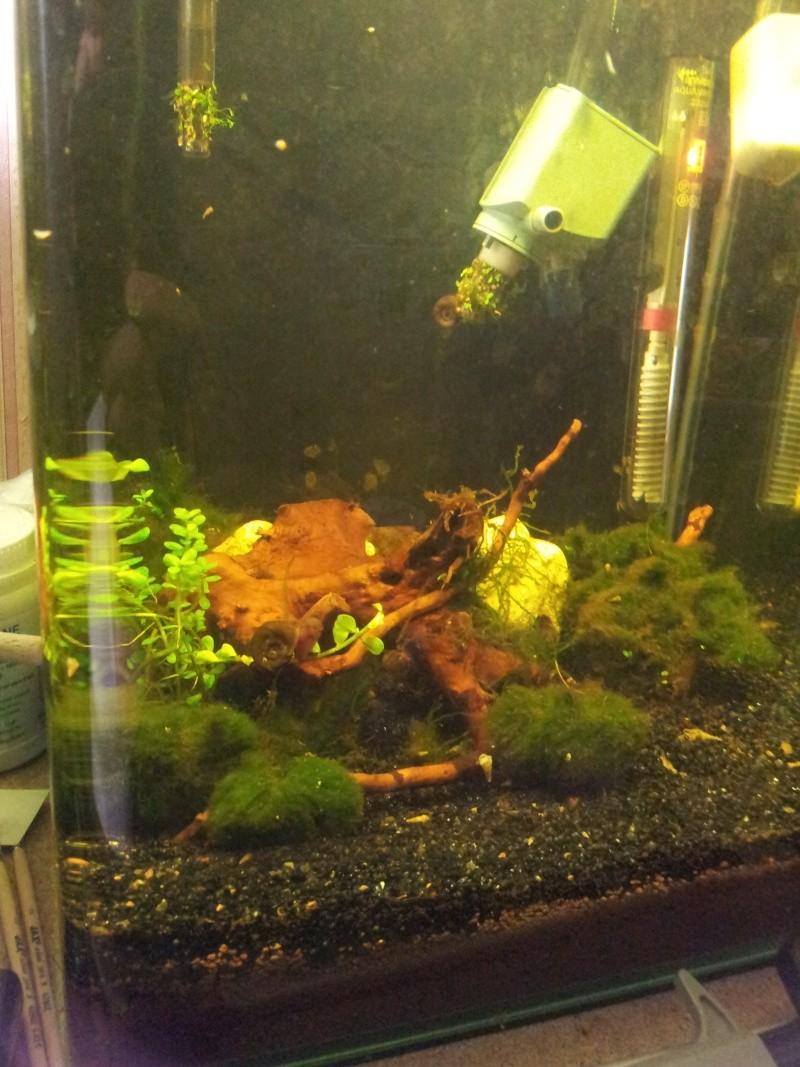 ma fishroom 20130116