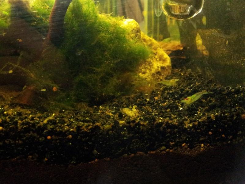 ma fishroom 20130117